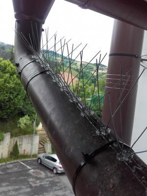 Alpinism utilitar brasov-protectii-pasari-tepi