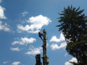Alpinism Utilitar Brasov / defrisare arbori