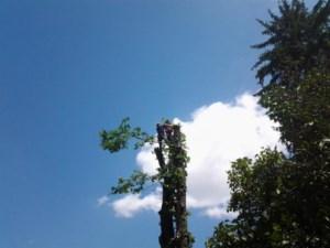 Alpinism Utilitar Brasov / toaletarea arborilor